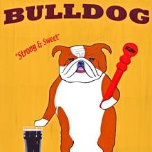 English Bulldog 2