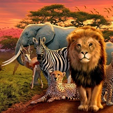 African Beasts