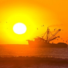 A shrimp boat with hungry birds at sunrise