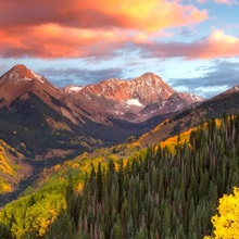 Evergreen trees and golden aspen trees on a mountainside