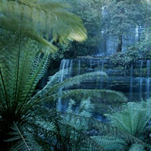 Lush ferns frame a waterfall in the park, Russell Falls, Tasmania, Australia