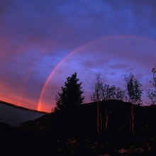 Rainbow over trees,  Northwest Territories, Canada