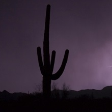 Single lightning bolt strikes in the desert during monsoon season