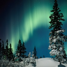 Snow blanketed evergreen trees and the aurora borealis at night, Wapusk National Park, Manitoba, Canada