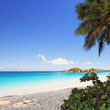 Palm Shaded Caribbean Beach, Trunk Bay, St John, US Virgin Islan