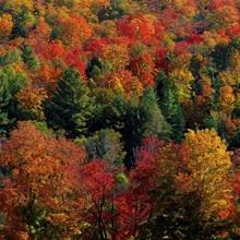 Autumn Leaves Vermont