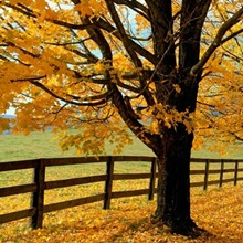 Autumn Trees near Waynesboro Virginia