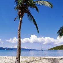 British Virgin Islands, Jost Van Dyke Island, Great Harbour, Palm trees at the seashore