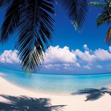 Palm leaves at beach