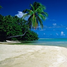 Palm tree on the beach, French Polynesia