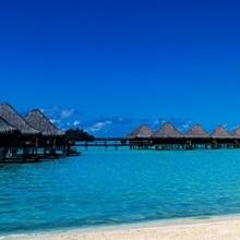Palm tree on the beach, Moana Beach, Bora Bora, Tahiti, French Polynesia