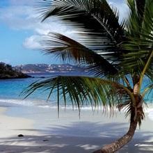 Palm tree on the beach, Salomon Beach, Virgin Islands National Park, St. John, US Virgin Islands