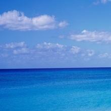 Palm tree on the beach, Seven Mile Beach, Grand Cayman, Cayman Islands