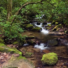 Rushing stream through Appalachian hardwood forest, spring, Great Smoky Mountains National Park, North Carolina