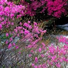 Ryuzu Falls Tochigi Japan