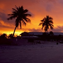 Silhouette of palm trees on the beach, Fort Myers Beach, Estero Island, Lee County, Florida,