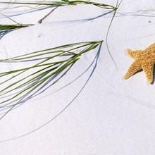 Starfish Beach AL