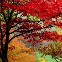 Trees in Butchart Gardens, Victoria, Vancouver Island, British Columbia, Canada