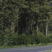 Trees on both sides of a highway, Richardson Highway, Alaska