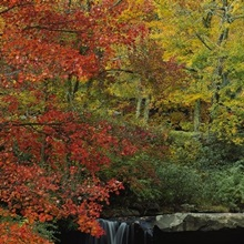Watermill in a forest, Glade Creek Grist Mill, Babcock State Park, West Virginia