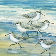 Surfside Sandpipers
