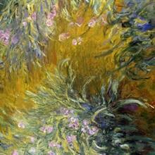 The Path through the Irises