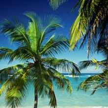 Palm trees on tropical beach, Dominican Republic, West Indies, Caribbean