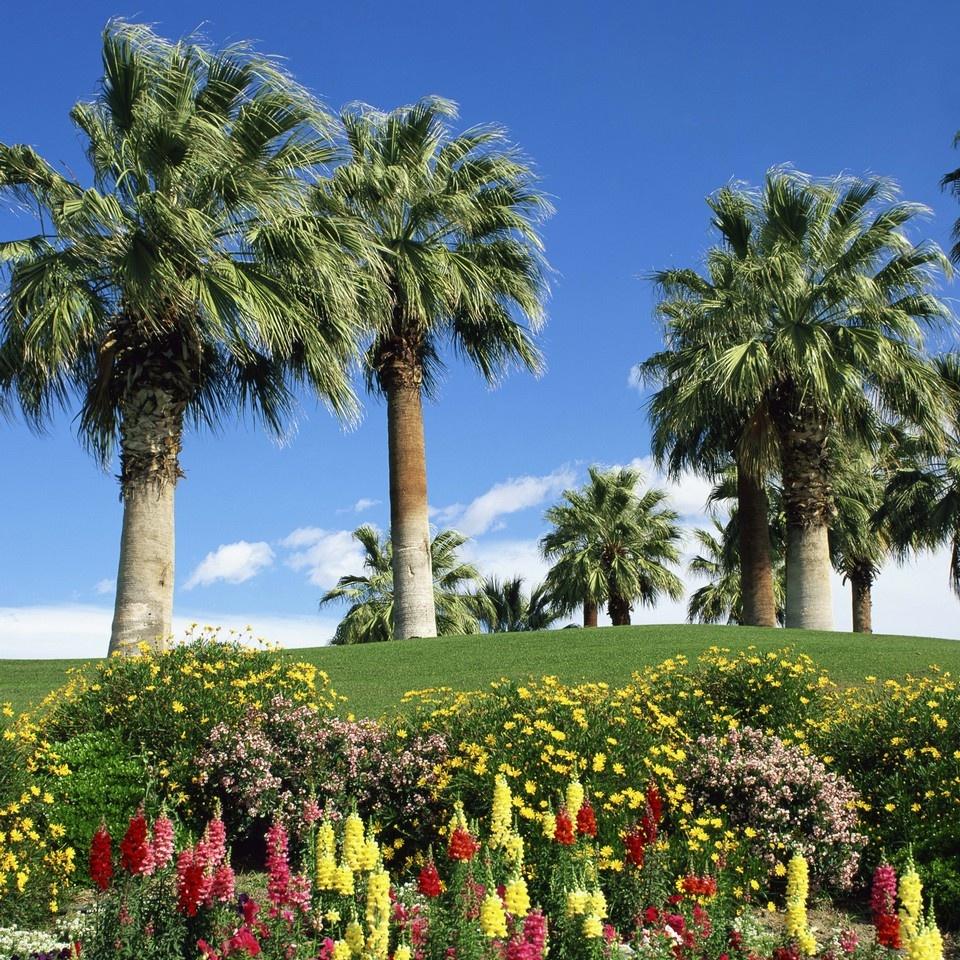 Petunias antirrhinum flowers with palms desert palm springs recently viewed clear items mightylinksfo