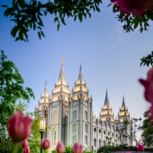 Salt Lake Temple with Tulips, Salt Lake City, Utah
