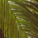 Ferns Wall Art & Canvas Prints   Ferns Panoramic Photos, Posters ...
