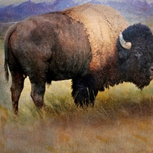Bison Portrait II