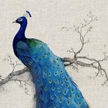 Peacock Blue Ii Wall Art Canvas Prints Framed Prints Wall Peels Great Big Canvas
